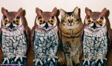 Not-Like-The-Others-Owls